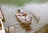 船着場ではたくさんの魚がお出迎え
